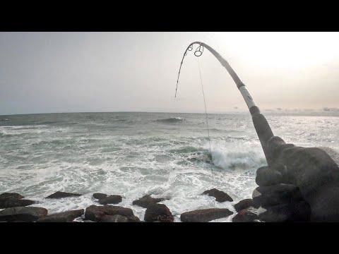 Fall Run Striped Bass - (Part 2) Early Morning Sunrise Bite - CRAZY WIND, TIDE,  - Long Island , NY
