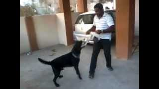 Dog Training Amravati Maharashtra