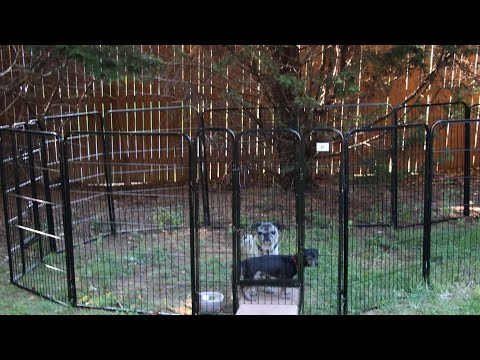 🐶 BestPet Heavy Duty Pet PLAYPEN Dog Exercise Pen Product Review 🐩