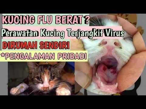 cara-mengobati-kucing-flu-pilek-virus-pada-kucing-perawatan-kucing