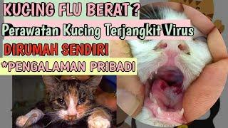 cara MENGOBATI KUCING FLU PILEK   VIRUS pada kucing   Perawatan Kucing