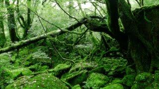[ 4K Ultra HD ] 屋久島 白谷雲水峡 Yakushima-island Shiratani Unsuikyo