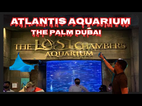 Atlantis Aquarium The Lost Chambers Aquarium The Palm Dubai by Jeffrey Marzan Vlog | Vlog#39
