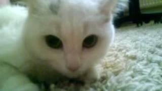Buda bizim cirmikli kedi :P BONCUK