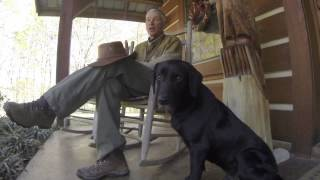 Retriever Training: Indoor Or Outdoor Dogs...does It Matter?