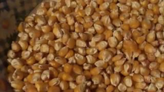 Кукурузная мука в домашних условиях!