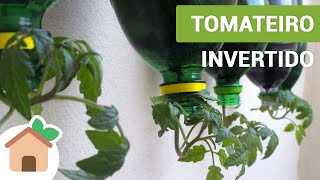 Tomateiro Invertido – Tomato Plants Inverted