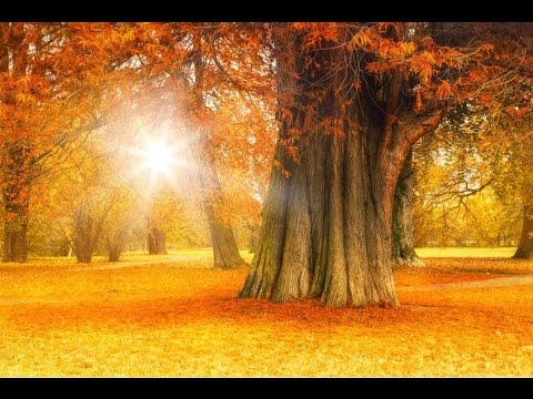 6 Hour Deep Healing Music: Relaxing Music, Meditation Music, Calming Music, Relaxation Music �