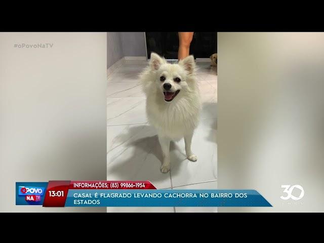 Casal é flagrado levando cachorra no bairro dos Estados - O Povo na TV