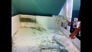 How to Clean your Guinea Pigs Cage with Fleece