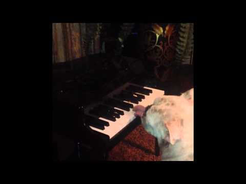 Bulldog Plays Piano Using His Only Tongue!