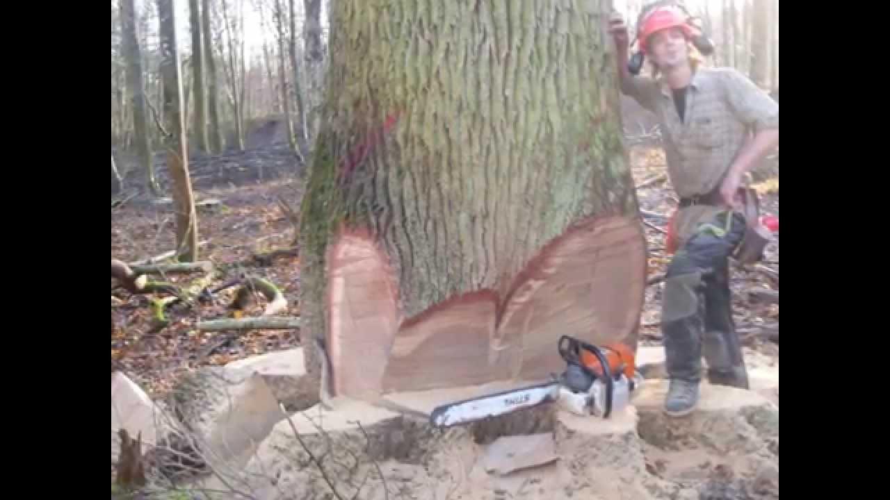 Bucheronnage Abattage Gros Bois  Entreprise Vall U00e9e Foret