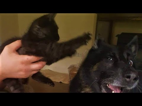 Top Cats are Jerks [Animal Videos] #1
