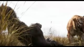 Книга джунглей - русский трейлер (2016)