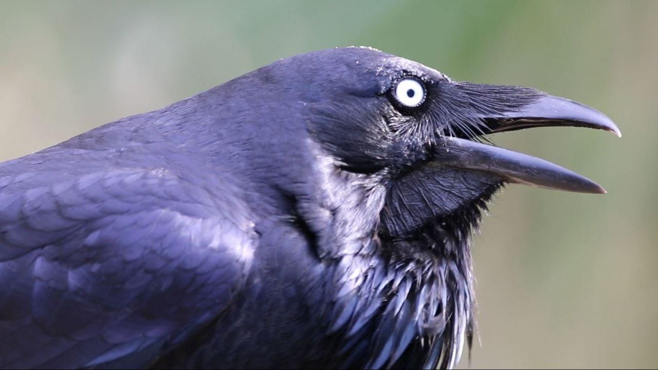 Raven Nude Photos 51
