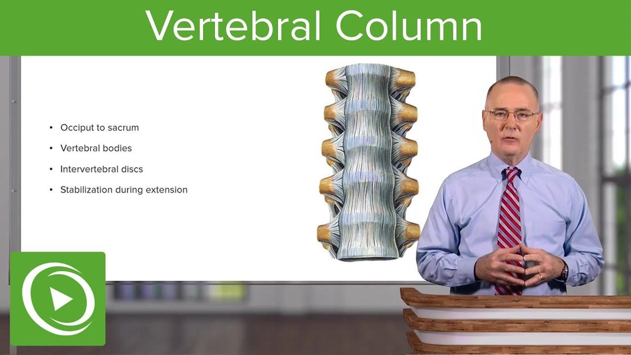 Vertebral Column  – Anatomy | Lecturio