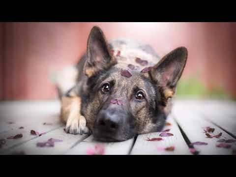 Собака осталась в тайге одна без хозяина, и вот что случилось дальше, слушайте и смотрите до конца..