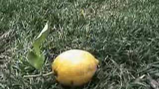 Fool's Garden - Lemon Tree Music Video