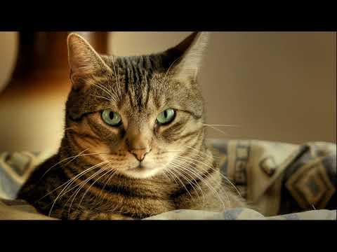 """Диктант для 4 класса """"Кошка"""" в проверкой"""