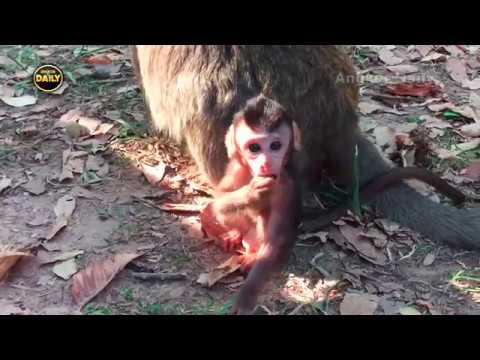 Thumbnail: How Cute Baby Monkey is!! Kind Mother/ Sunshine. [Angkor Daily152