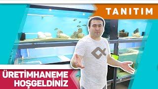 ÇOK EĞLENCELİ ÜRETİMHANE TANITIMI (Akvaryum Balıkları Üretimhanesi)