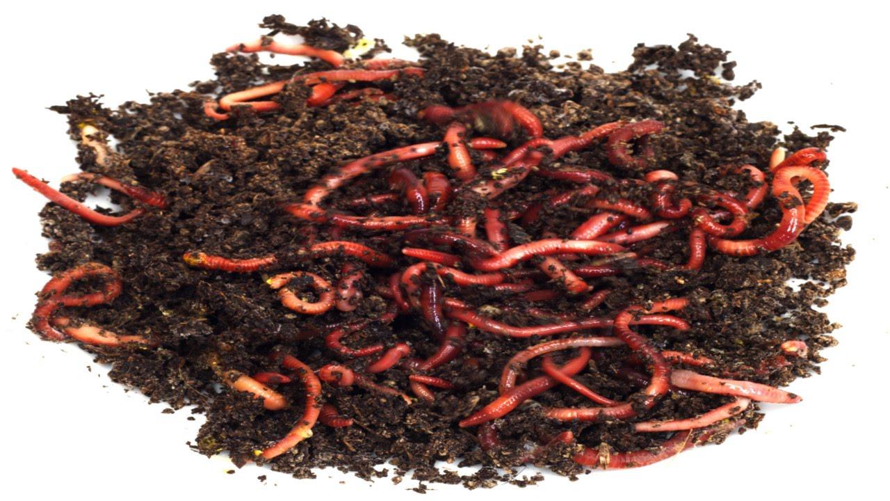 Curso cria o de minhocas o minhoc rio cursos cpt for Como criar caracoles de jardin
