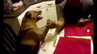 Человек против собаки
