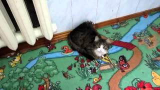 Мега ржач! кошка Маша смешно мяукает!!