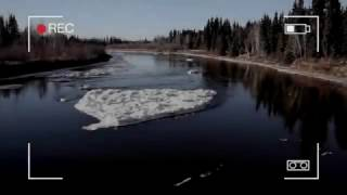 Big Sea Monster caught on camera in the Alaska's icy Chena River