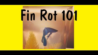 How To Cure Fin Rot: Noticing And Treating thumbnail