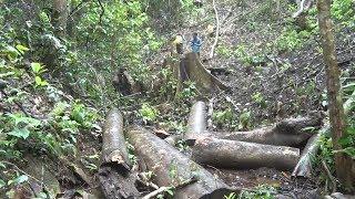 Khởi tố nguyên Trưởng công an xã Đăk Ui về tội vi phạm quy định về khai thác và bảo vệ rừng