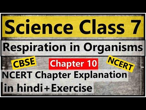 Respiration in organisms class 7
