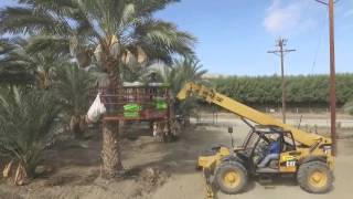 PHOENIX AGROTECH DATE FARM - COACHELLA VALLEY, CA
