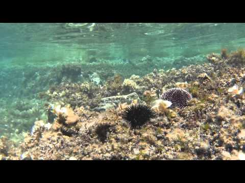 Sony HDR AS100V Underwater Test (Greece 2014, Chalkidiki)