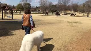 ボスのご用事のついでに、とちぎわんぱく公園(壬生町)をお散歩して来ま...