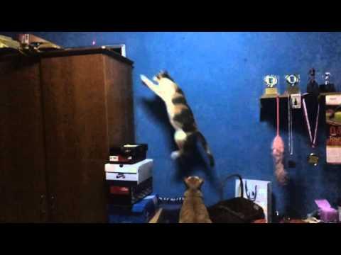 Slow motion cat jump