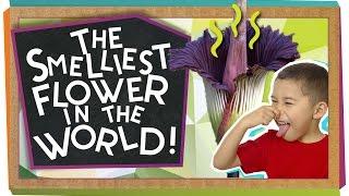 The World's Smelliest Flower