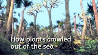 How plants crawled out of the sea