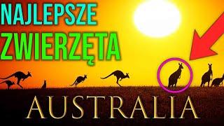 Top zwierzęta Australii