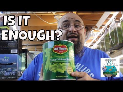 How To Feed Plecos