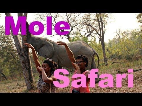 SlamPow Ghana | MOLE SAFARI