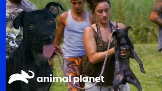 28 Dogs Rescued From A Burned Down House | Pit Bulls & Parolees