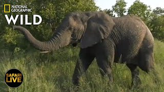 Safari Live - Day 319 | Nat Geo WILD