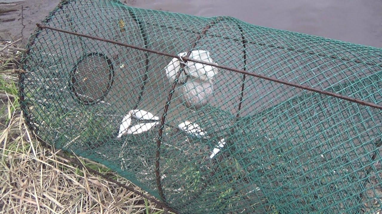 Рыбалка На Мордушку Эксперимент Чебаки (Ловушка для рыбы Морда)