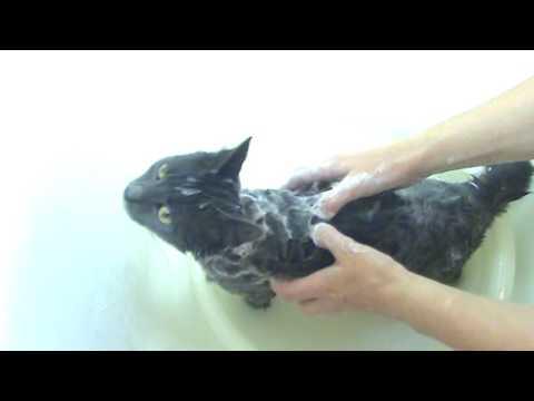 Купаем кошку дегтярным мылом.