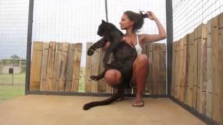 Леопард узнал свою спасительницу и прыгнул к ней на руки