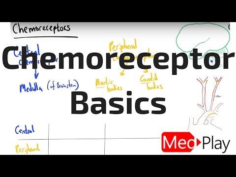 Chemoreceptor Basics