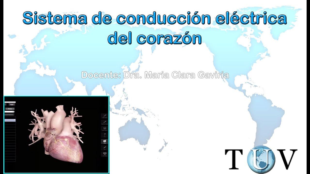 Sistema de conducción eléctrica del corazón - Electrocardiograma ...