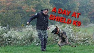Chasing EXCELLENCE  Real Dog Training VLOG 18  #dogtraining #K9