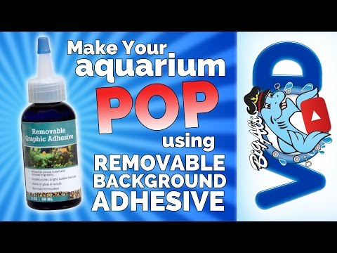 Make Your Aquarium POP With Removable Background Adhesive | Big Al's